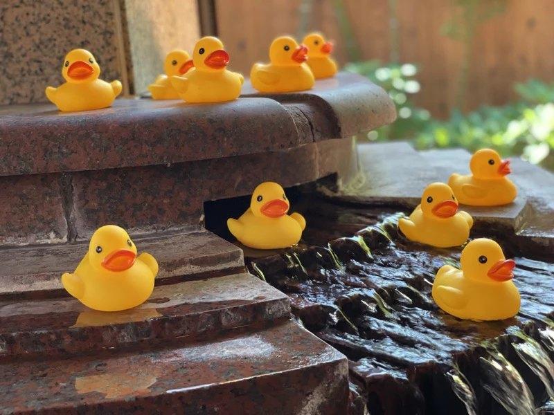 女性大浴場『季里の湯』へ、アヒル部隊が進軍中?